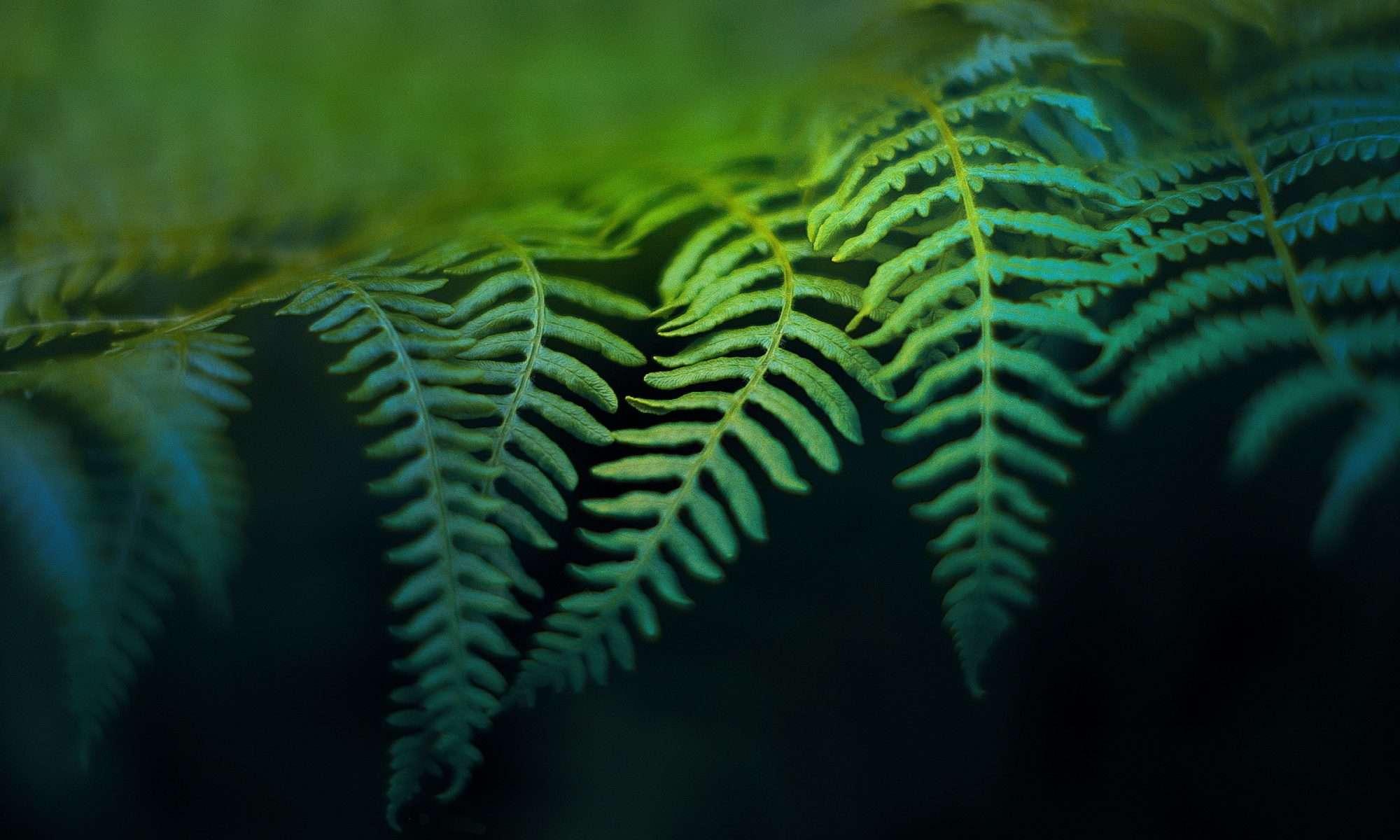 Paradise Plants