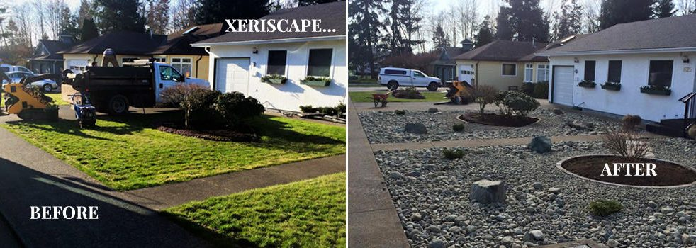 Xeriscape Before & After