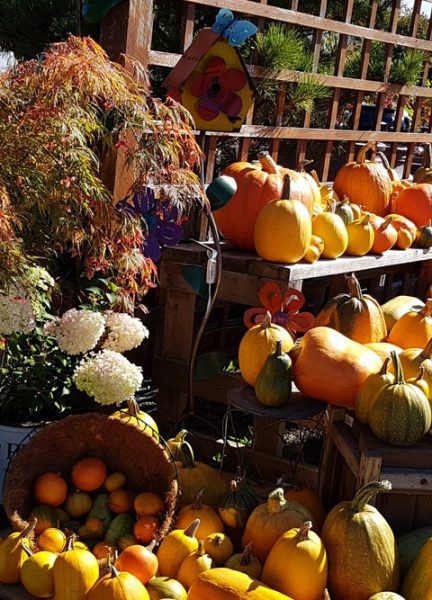Fall Harvest Display