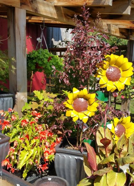Metal Sunflowers in Display