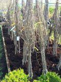Bareroot Fruit Tree Bundles