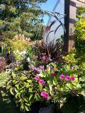Fountain Grass & Flowers Mix